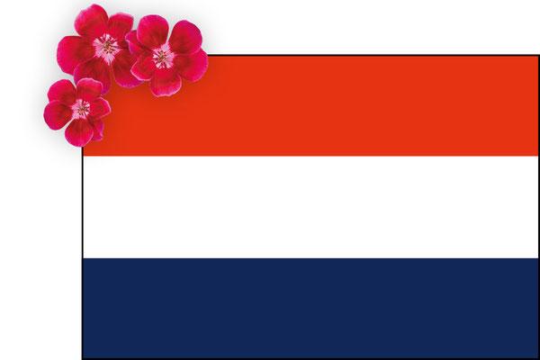 Webshop Netherlands