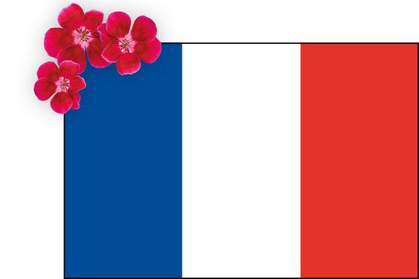 Webshop France