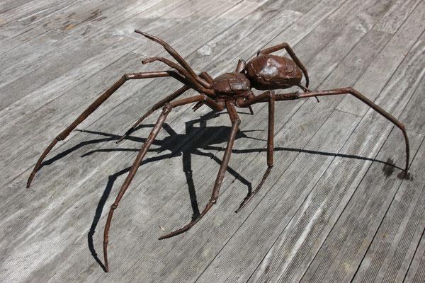spider araignée spin