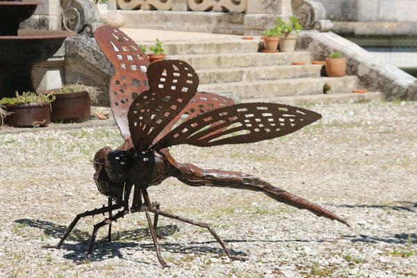 Dragonfly libellule libel