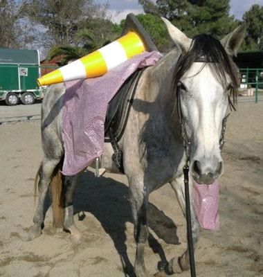 Tu seguridad y la del caballo depende de ti.