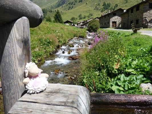 Sally das Schaf