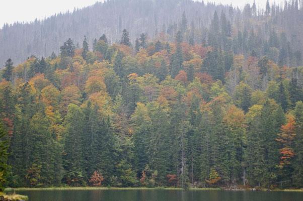 Rachelsee, Bavarian Forest