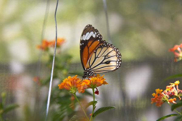 Chiang Mai, Bai Orchid-Butterfly Farm