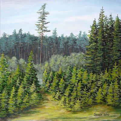 Geheimnisvoller Nadelmischwald, 30 x 30 cm, 190 €