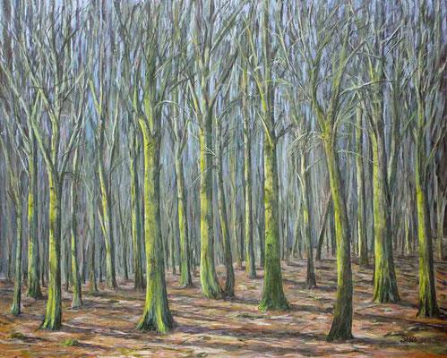 Vorfrühling im Buchenwald, 80 x 100 cm, 900 €