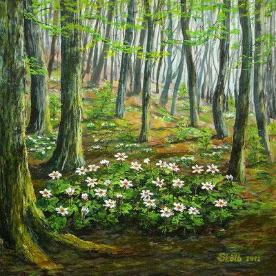 Buschwindröschen im Eichen-Hainbuchen-Wald, 30 x 30 cm, 230 €