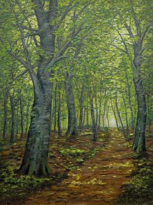 Septembersonne im Buchenwald, 60 x 80 cm, 600 €