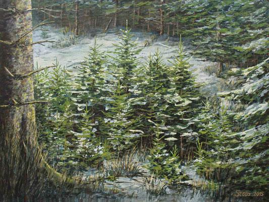 Jungfichtengruppe im Schnee, 60 x 80 cm, 600 €