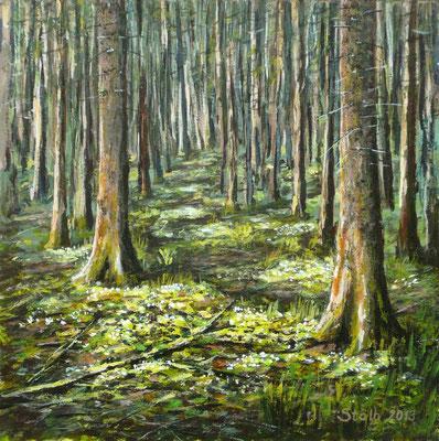 Frühling im Fichtenwald, 30 x 30 cm, 230 €