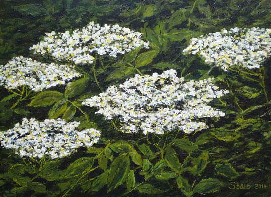Hollerblüten, 34 x 46 cm, 250 €