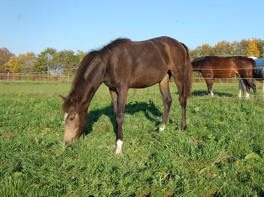 Im Oktober konnten die Pferde noch immer die Koppel genießen