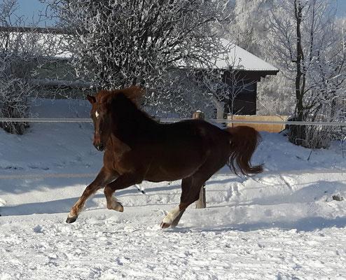 Herumtollen im Schnee - welch eine Freude