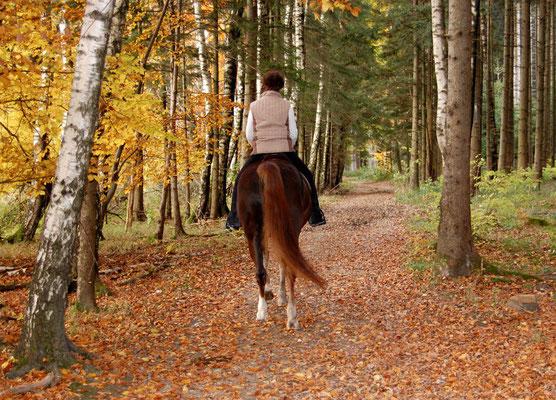 Gemeinsam den Herbstwald genießen