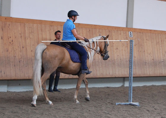 Beim Working Equitation Kurs im Sept. 2019