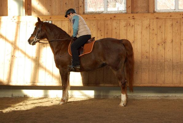 Februar 2019 Beim Working Equitation Kurs mit Mihai Maldea