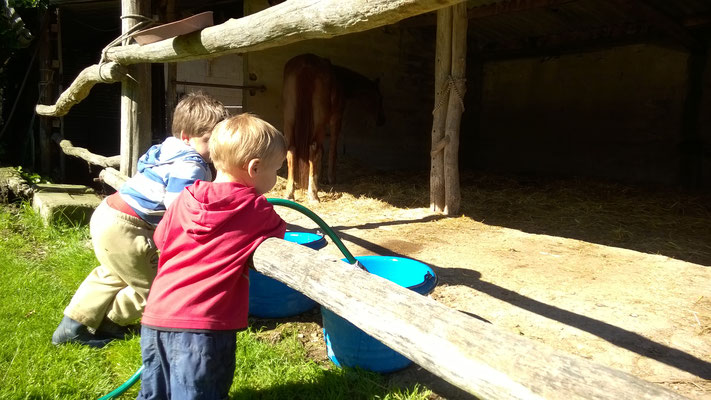 Tränken der Pferde, sehr beliebt bei den Jungs.