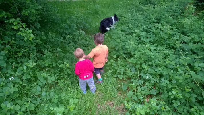 Der Abenteuergeist wird bei den Hundespaziergängen im Wald geweckt.