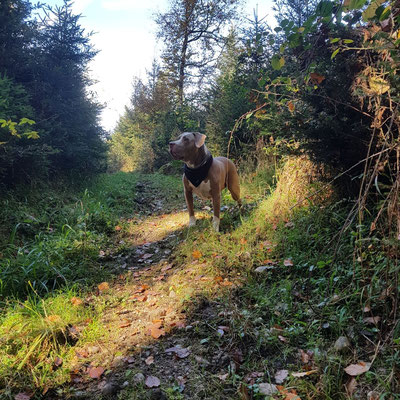 Hundehalstuch Schweiz