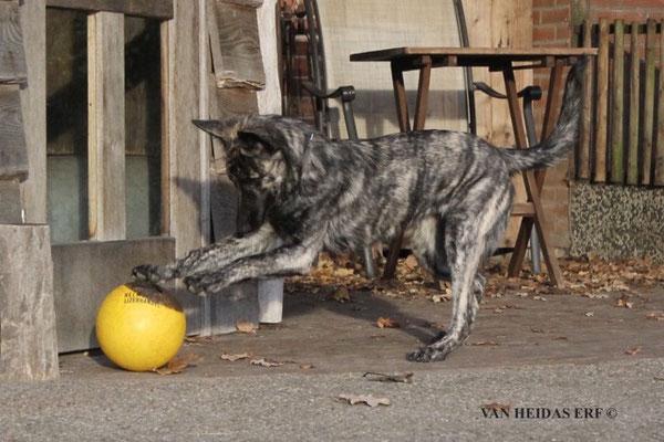 Noia vermaakt zich met een bal