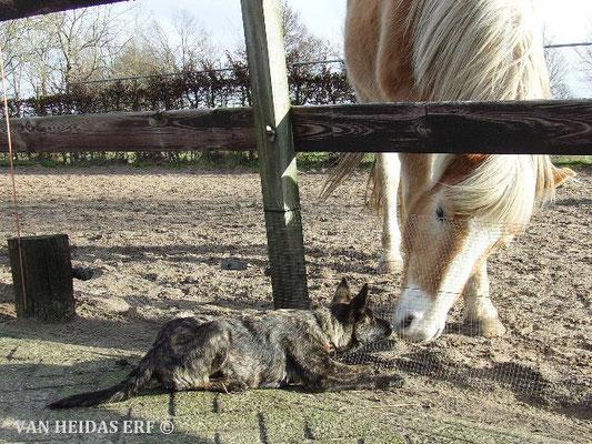 onderonsje met ons paardje