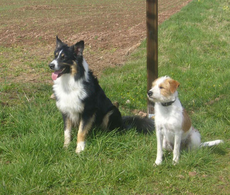 Kismo mit Freund Pepper