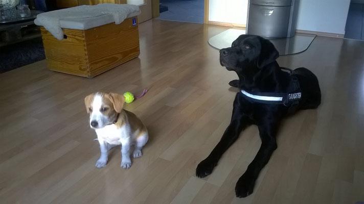 Dano und Rufus