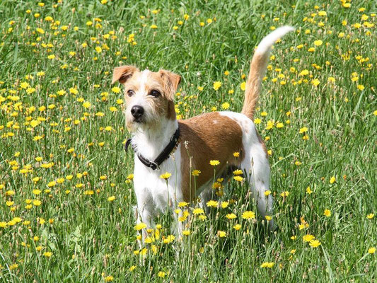 Flax - fast 8 Jahre alt