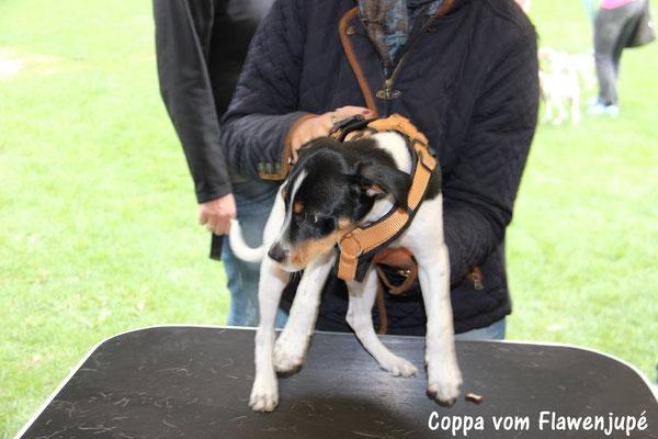 Coppa, noch nicht warm gelaufen;-)