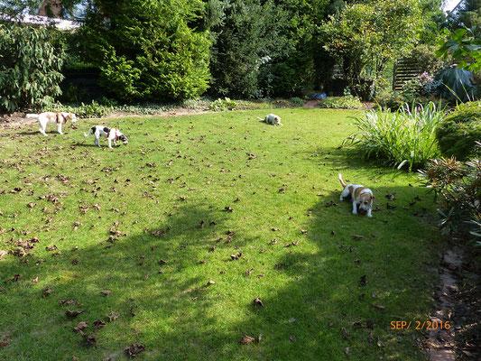 knabbern im Garten