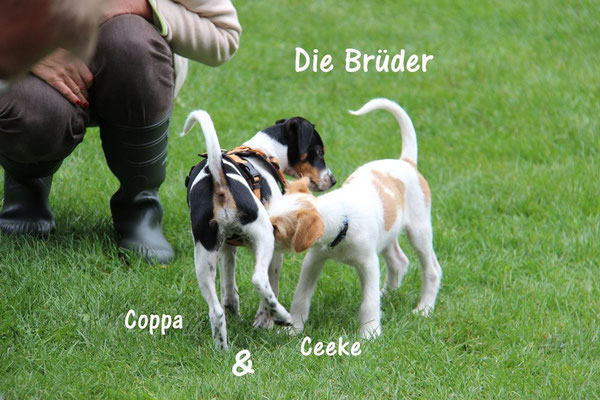 die Brüder, Coppa & Ceeke