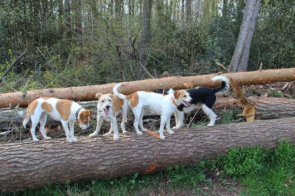 alle Mann auf den Baumstamm