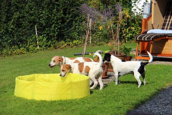 Bounce hat sogar einen Pool