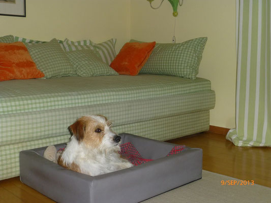 Kismo, auch im Urlaub das eigene Bett dabei!