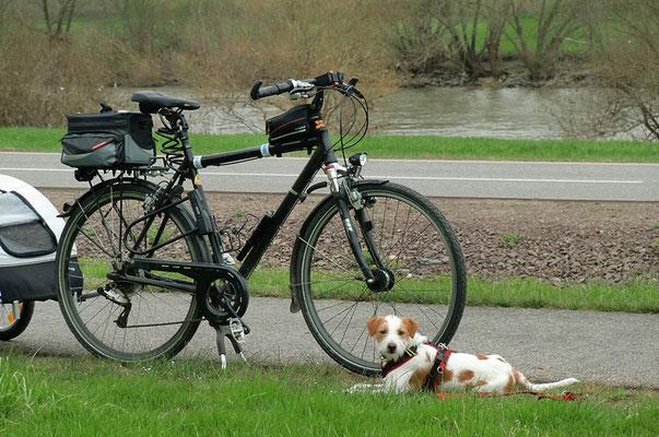 Fahrrad-Begleiter Deery
