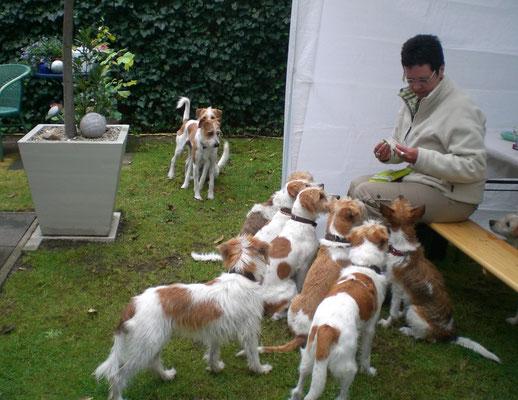 Leckerlies für die Hunde