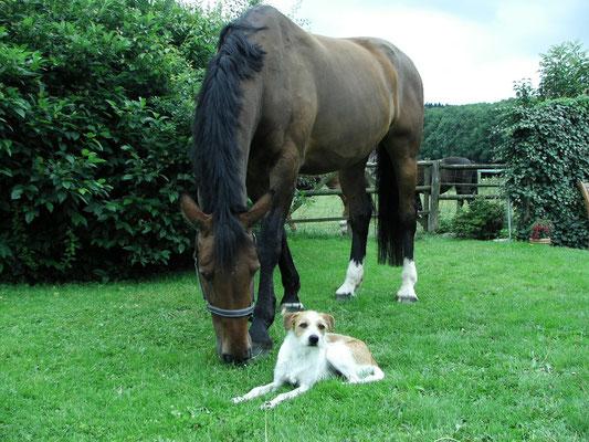 Arild und sein großer Freund Llano