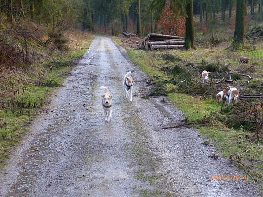 ...im Wald unterwegs