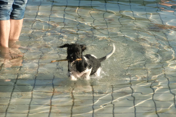 beim Hundeschwimmen im Sommerbad