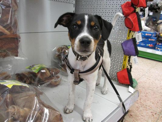 Shoppen im Hundeparadis