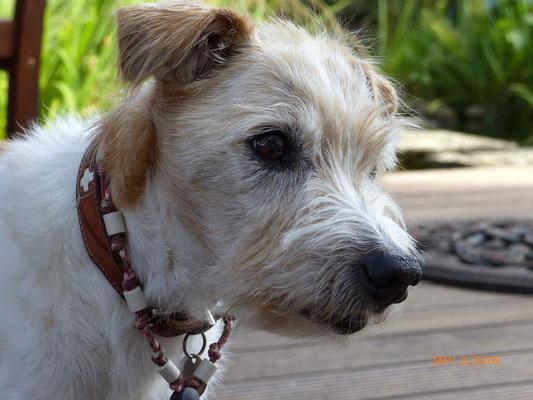Opi Flax - 13 Jahre 6 7 Monate alt