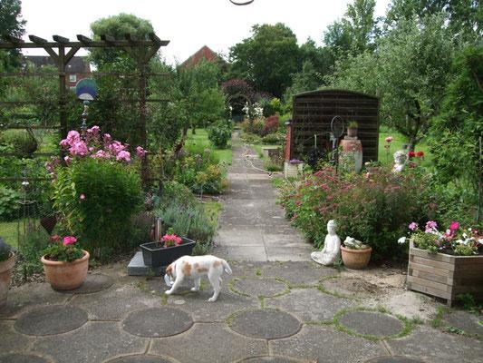 im Kleingarten