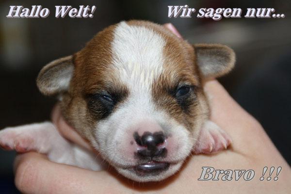 Bravo hat als 1, die Augen offen