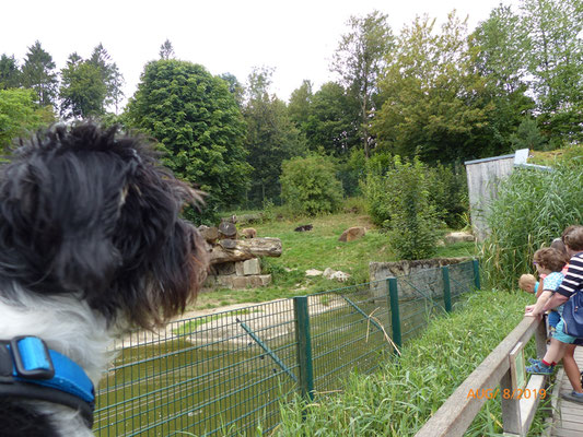 Cenia beobachtet die Bären