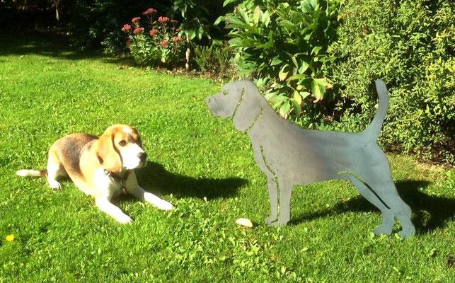 Donna (piccos Donna of justine's pack) mit Ihrem neuen Freundin!