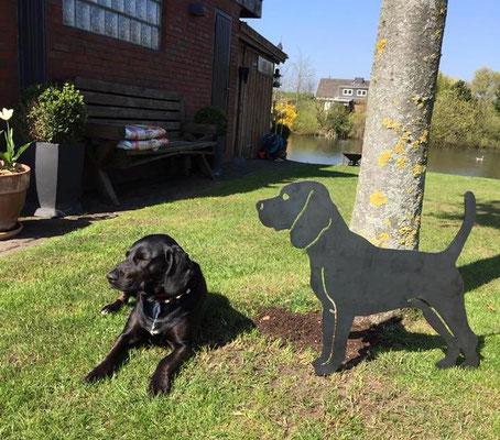 Black Beagle Ida