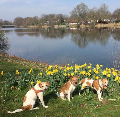 Ajoula, Amine und Brezel am See in Warendorf
