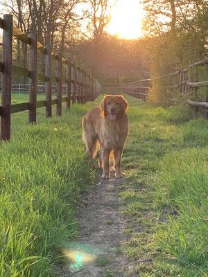 Mailo vom Hervester Hof ist jetzt 3 Jahre alt - also erwachsen :)