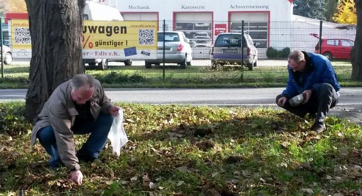 Wünschendorf an der Elster Krokusse für Wünschendorf