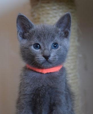 Кошечка Оранжевая